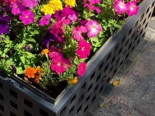 Planter boxes in Manly - Tim Pickles