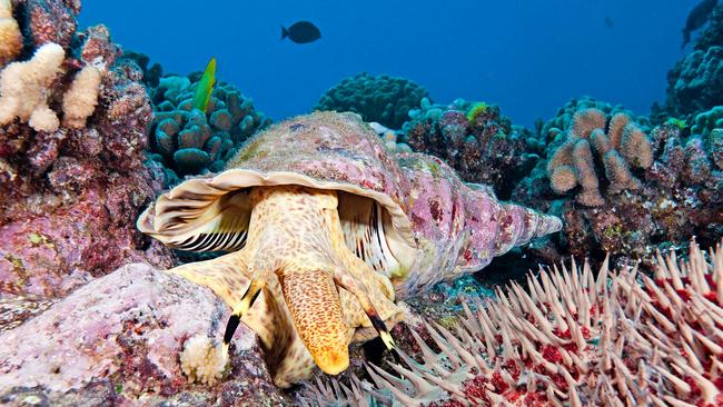 The crisis could also damage the state's famous coral reefs. Source: AFP PHOTO / Nature Publishing Group / David Fleetham.