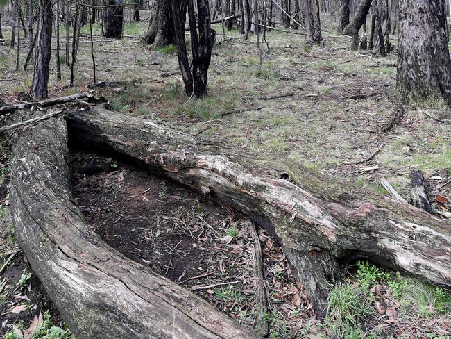 The site where Karen Ristevski's body was dumped. Picture: Nicole Garmston