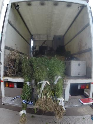 More than 12,500 cannabis plants, with a combined potential street value in excess of $16 million, have been seized.