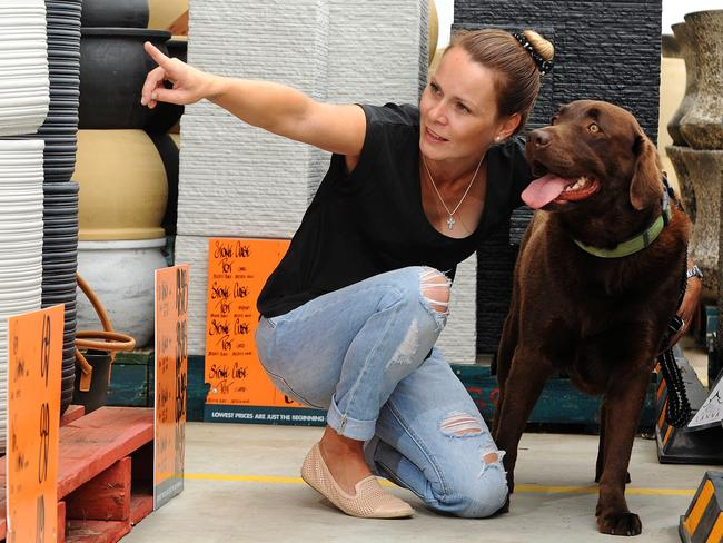 Home improvement: chocolate labrador Lenny helps owner Stacey Evans shop at the Burleigh Waters Bunnings store in Queensland. Picture: John Gass