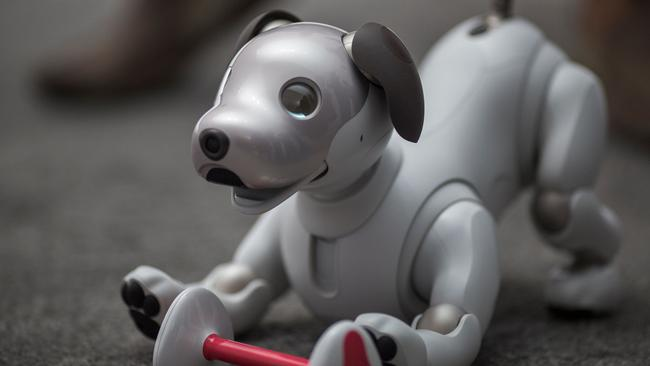 If you love dogs but don't want the mess, why not try a robot pup? Picture: David McNew/AFP