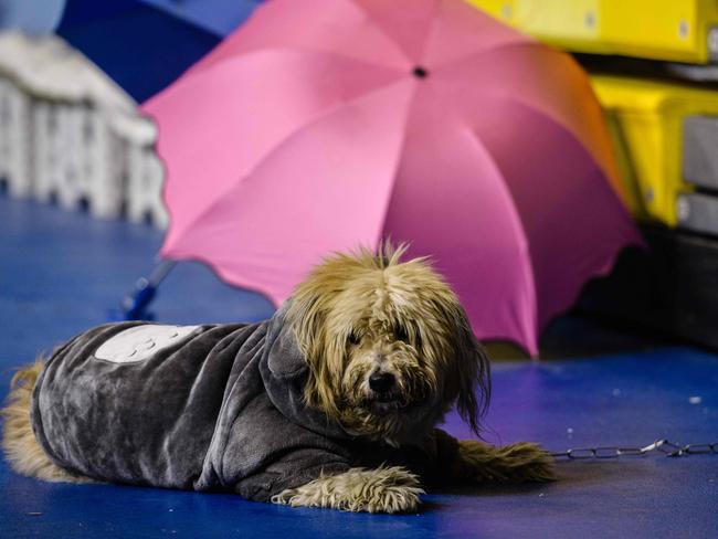 A dog is sheltered along with residents in a local stadium after an earthquake and aftershocks hit the Taiwanese city of Hualien. Picture: AFP/Anthony Wallace