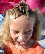 <p>A female Chilean rose-haired tarantula crawls on eight year-old Stephanie Domes's head at SeaWorld, San Diego.</p>