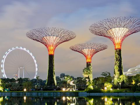 Explore Supertree Grove at Gardens by the Bay.