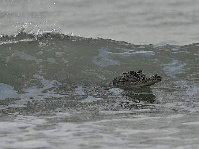 Hang ten: The croc frolics in the waves at Dripstone Cliffs. Picture: NT News