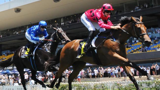 Secret Lady was too slick for the heavily backed Plague Stone at Rosehill on Saturday. Picture: Simon Bullard