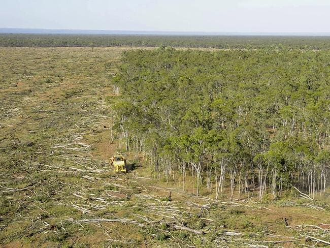 Tree-clearing has caused the greatest animal welfare crisis in Australia, WWF says. Picture: Supplied