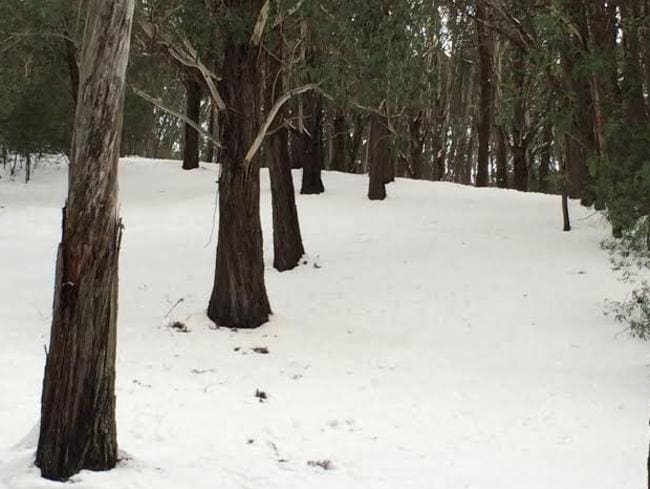 Nature's slalom poles on the lower slopes of Mt Buller, Victoria.
