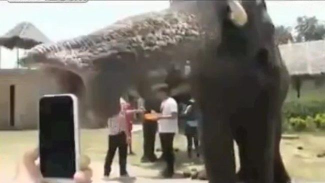 Elephant eats iPhone