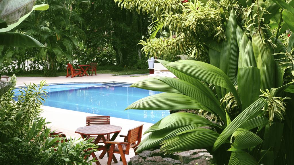 How to create a tropical garden when you don t live in the for Tropical pool gardens