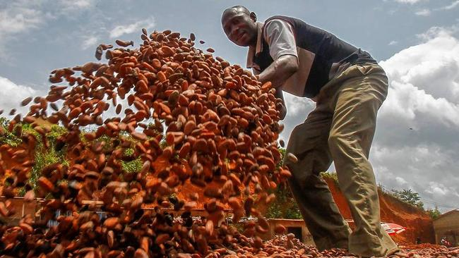 A farmer in Ivory Coast moves his cocoa beans on his farm. Fairtrade ensures farmers are paid a fair price for their crop. PHOTO: LEGNAN KOULA/EUROPEAN PRESSPHOTO AGENCY