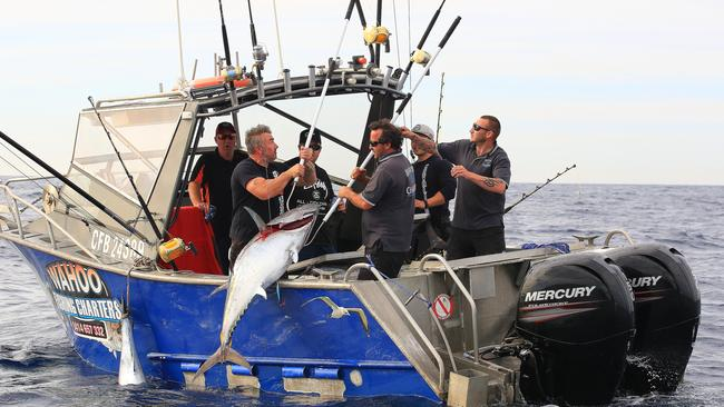 """tuna fishing with the walrus Bluefin tuna fishing in the pacific off of southern california, with the """"la nina""""  condition, keeps the california offshore waters cooler than."""