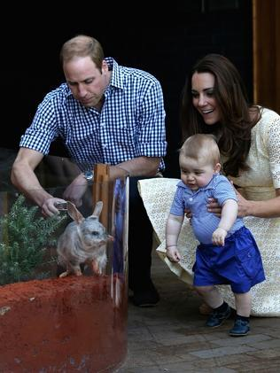 One of the stars of the royal tour has been Taronga Zoo's bilby named George. Picture: Getty