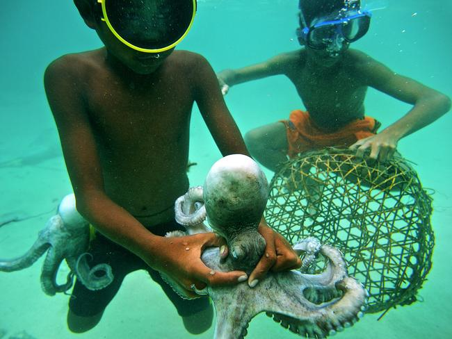 The Bajau children are no strangers to working, with these two young boys catching an octopus with their hands.