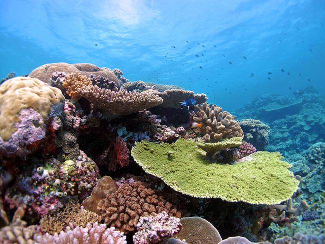 Applause ... There was a unanimous vote for Environment Minister Greg Hunt and his delegation at the UNESCO World Heritage Committee, for their draft management plan for the coral reef. Picture: Line K Bay, AIMS