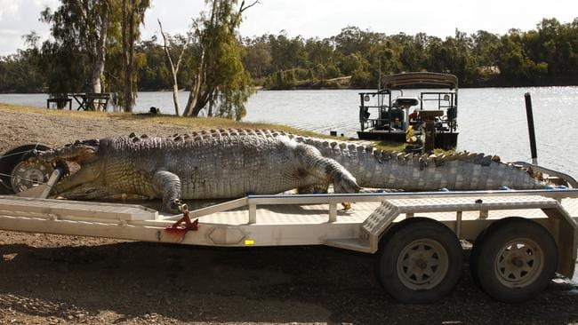 Warning: It's feared the death of the crocodile will leave younger males more aggressive as they fight to fill his spot. Picture: Police Media