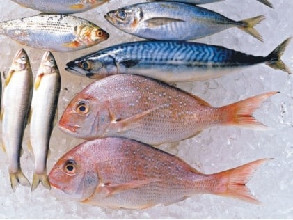 Types of fish to eat for Best type of fish to eat