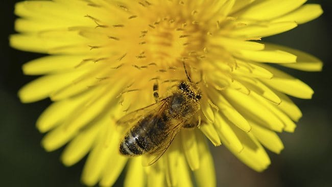 Honeybees with a taste for sugar are helping find landmines left behind in Croatia after the Balkan Wars of the 1990s. Picture: AFP PHOTO