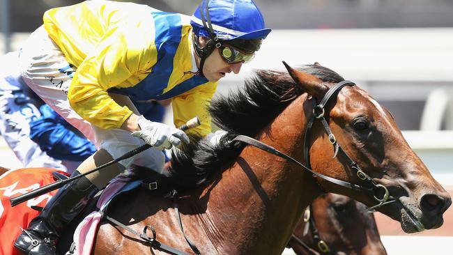 Tony McEvoy says punters should not overlook Run Naan in the Blue Dimaond.
