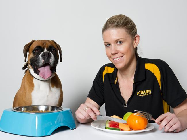 Does It Matter If Dog Food Has Grains