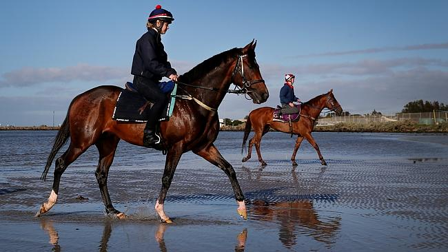 The Murray Baker-trained It's A Dundeel is certain to figure prominently in the Sydney autumn. Picture: Colleen Petch