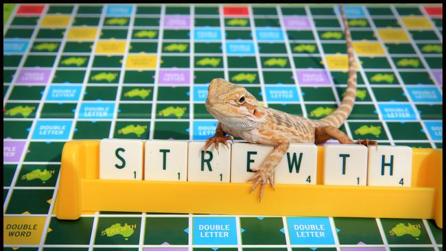 Aussie Scrabble is being sold for $49.99. Picture: Jamie Hanson