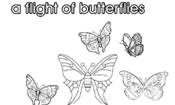 Collective nouns: A flight of butterflies
