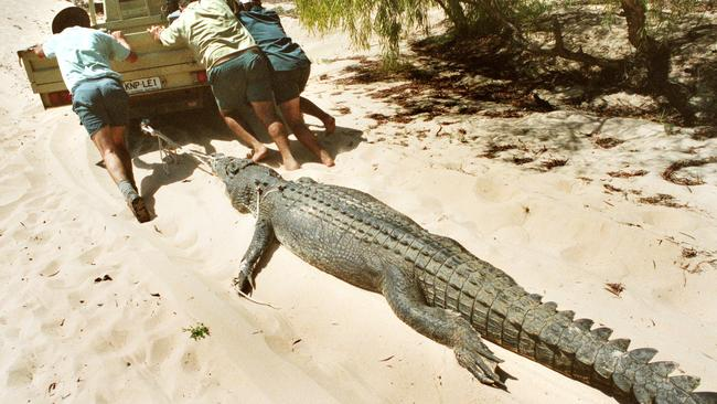 Rangers using a 4WD vehicle to drag the dead crocodile that attacked and killed German tourist Isabel von Jordan at Sandy Creek Billabong in Kakadu National Park, in 2002.