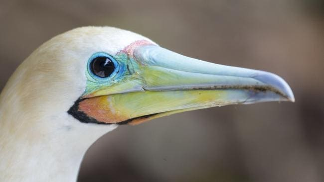 christmas island animals eco lodge to open in christmas island national park
