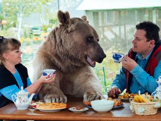 Bear living with family