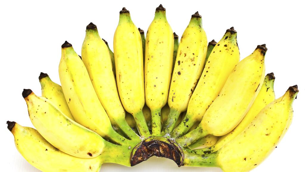 the fate of a banana Read dan koeppel's posts on the penguin blog a gripping biological detective story that uncovers the myth, mystery, and endangered fate of the world's mos.