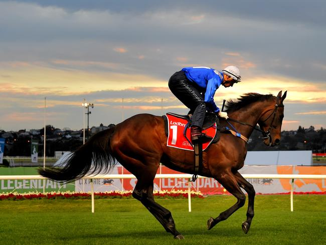 Winx Next Race Cox Plate 2017: Andrew Rule Says She's Got