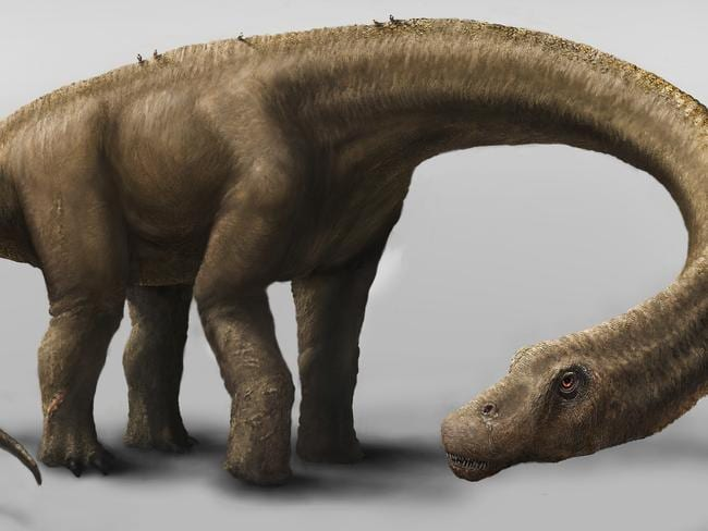 Dreaded Dreadnoughtus ... this is an artist's impression of the 65 tonne herbivore. Picture: AP Photo/Carnegie Museum of Natural History