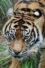 Photos I have taken at Adelaide Zoo.I hope you like them. Pic: Gaynor Forbes