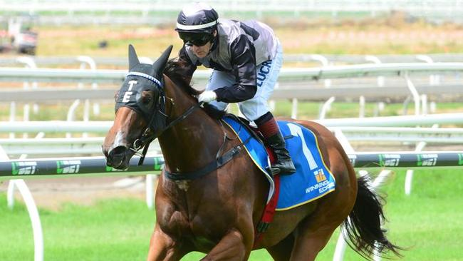 Houtzen trainer Toby Edmonds is making an assault on Tuesday's Coffs Harbour meeting