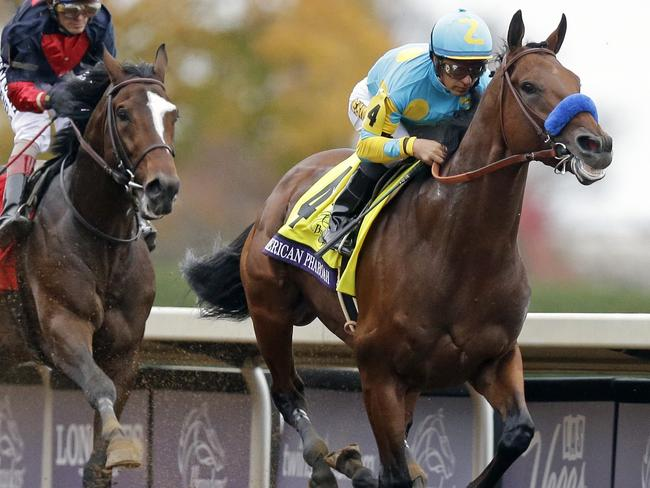 American Pharaoh S Stud Fees Could Rake In More Than 50