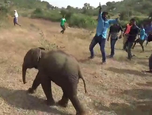 Everyone was thrilled to see the elephant walk off to find its herd, which was in a nearby forest. Picture: Caters News.