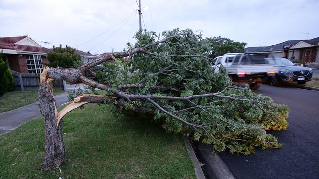 Trees snapped by the high winds. Picture: Norm Oorloff