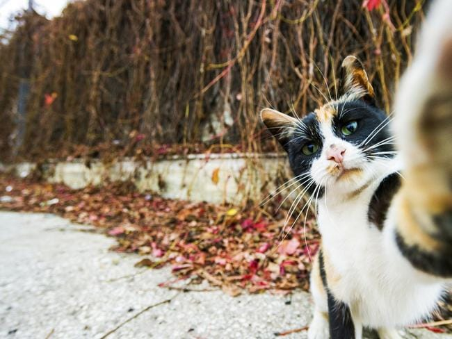 A cat from this photographer's neighbourhood was pictured trying to touch his lens while this shot was taken titled 'A Cat Selfie'. Picture: Marian Gabriel Constantin/ Barcroft Media/Getty Images