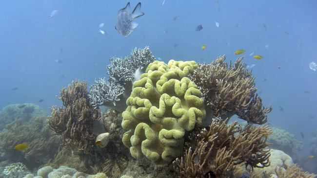 The Great Barrier Reef is home to more than 400 kinds of coral, plus hundreds of animal species. Picture: AFP / William West
