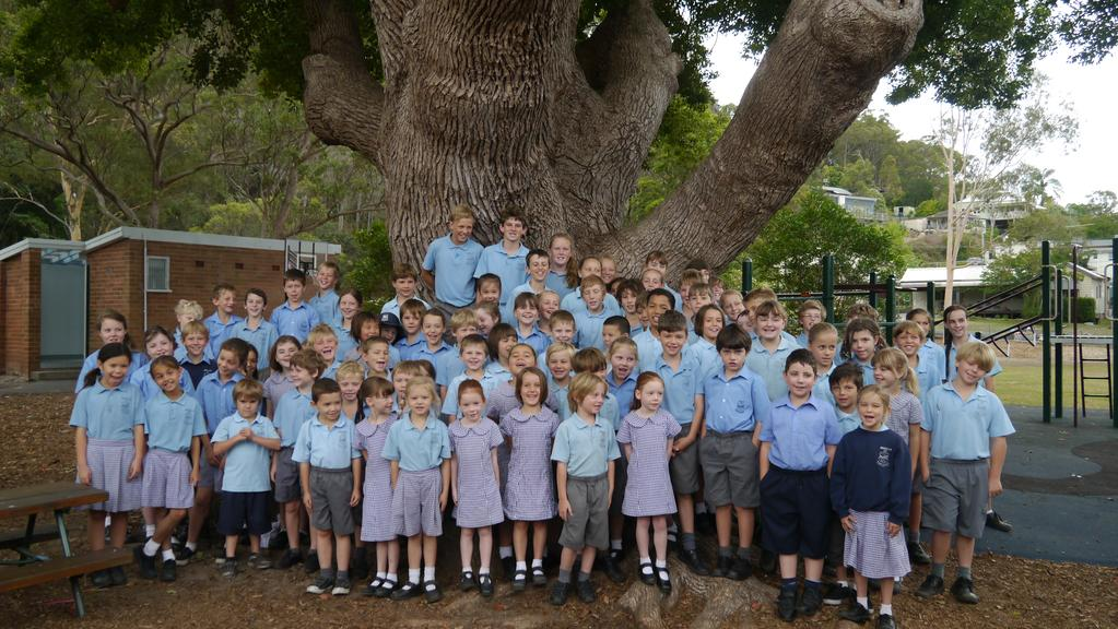 Brooklyn Public School Parents And Pupils Save A Camphor Laurel Tree From Being Cut Down For A