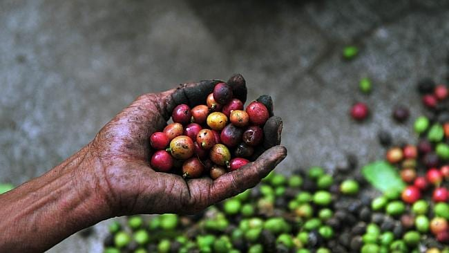 The price of coffee has surged to it's highest in months because of dry weather in Brazil.