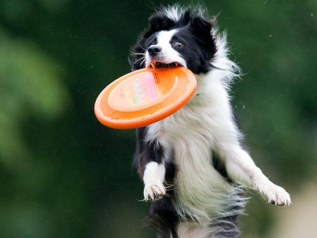 "Next time you play frisbee with the dog, remember it's actually called a ""flying disc""."