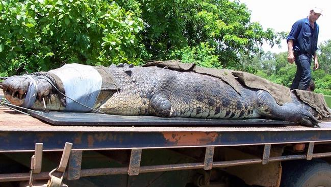 Second Biggest Croc Caught In Australia Outback Wrangler Matt Wright - Meet worlds largest crocodile caught philippines