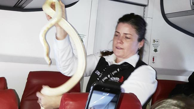 In this Sunday, March 19, 2017 photo, a flight attendant holds a snake found on a Ravn Alaska flight between Aniak, Alaska and Anchorage. The snake escaped from a passenger on a previous flight. The flight attendant captured the reptile and placed it in a trash bag and stowed it in an overhead luggage compartment. (Anna McConnaghy via AP)