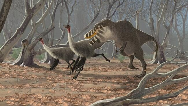 A fluffy Tarbosaurus pursues a pair of feathery Gallimimus. Picture: National Geographic / JOHN CONWAY