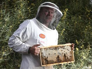 Potential SABJ cover: Beekeeper Crispin Boxhall will be in suit and will open a hive for us, outside.