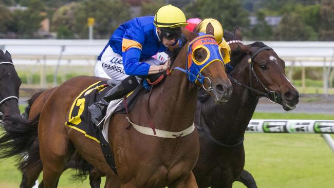 Riziz will be among the outsiders in the Goodwood on Saturday. Picture: Atkins Photography