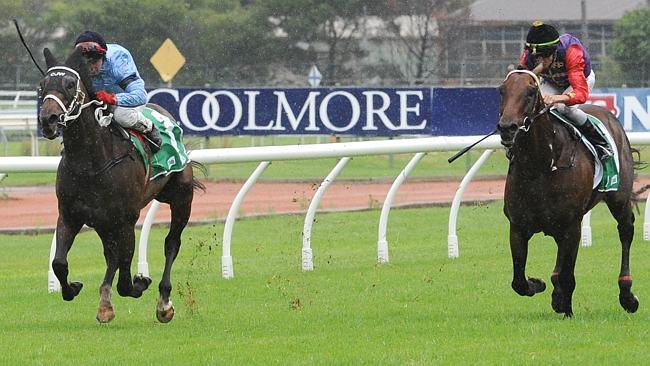 As you can see, Opinion thrives in the wet, judging by his win two starts back. Picture: Simon Bullard